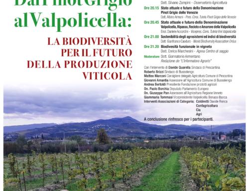 """Convegno """"Dal Pinot grigio alla Valpolicella"""" l'11 dicembre 2019"""